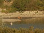 abbeverata del daino al lago della villa a radda (4)