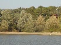 abbeverata del daino al lago della villa a radda (6)