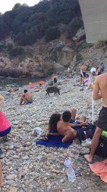 cinghjiali sulla spiaggia di livorno foto da mare matto calignaia (1)