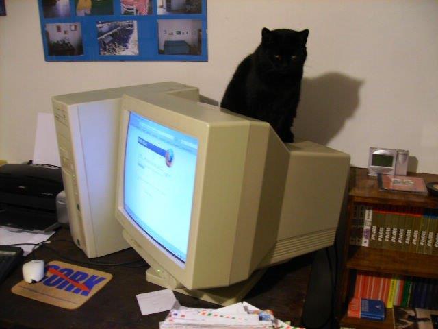 gatta sullo schermo