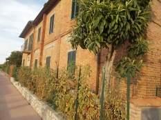 la casa con la siepe di pomodori (1)