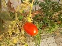 la casa con la siepe di pomodori (10)