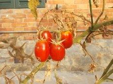 la casa con la siepe di pomodori (4)