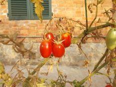 la casa con la siepe di pomodori (5)