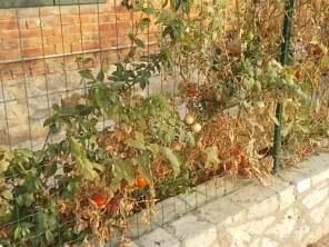 la casa con la siepe di pomodori (6)