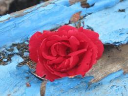 rosa-sulla-barca-sotto-il-moro