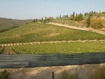 vertine vigne ex porta dei bischeri con telo ombreggiante (9)