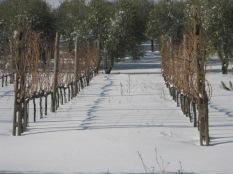 inverno a vertine (32)