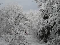 inverno a vertine (58)