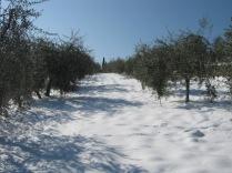 inverno a vertine (88)