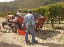 vertine vendemmia 2017 (32)