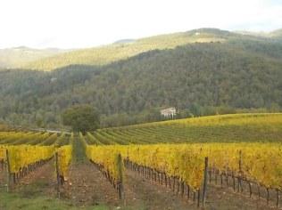 vigne-autunno-giallo-castagnoli-8