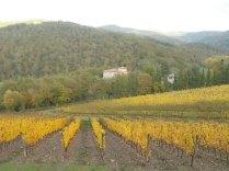 vigne-autunno-giallo-castagnoli