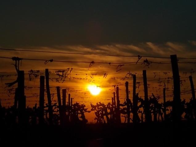 tramonto-che-entra-la-luce-nel-sangiovese