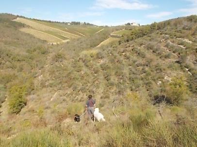 vertine battuta di caccia al fagiano (1)