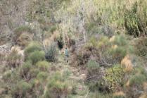 vertine battuta di caccia al fagiano (10)