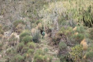 vertine battuta di caccia al fagiano (11)