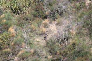 vertine battuta di caccia al fagiano (13)