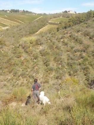 vertine battuta di caccia al fagiano (2)