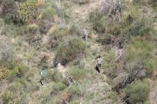 vertine battuta di caccia al fagiano (4)