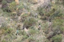 vertine battuta di caccia al fagiano (5)