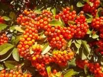 vertine colori d'autunno (1)