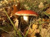 vertine colori d'autunno (11)