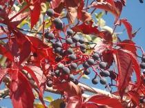 vertine colori d'autunno (15)