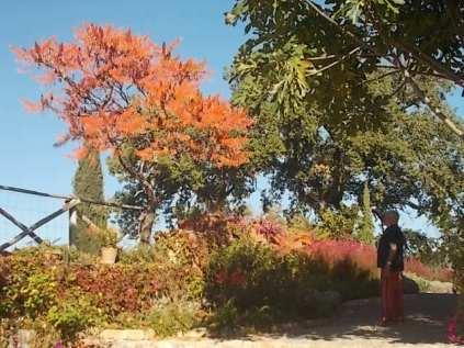 vertine colori d'autunno (17)