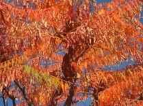 vertine colori d'autunno (18)