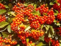 vertine colori d'autunno (2)