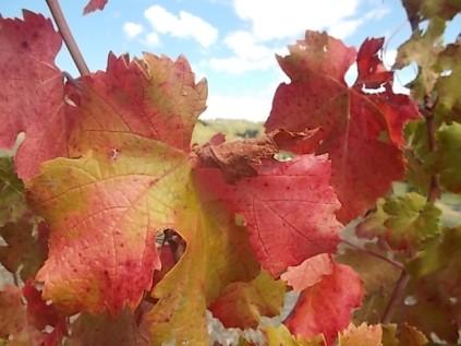 vertine colori d'autunno (5)