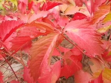 vertine colori d'autunno (7)
