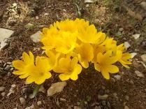 vertine colori d'autunno (9)