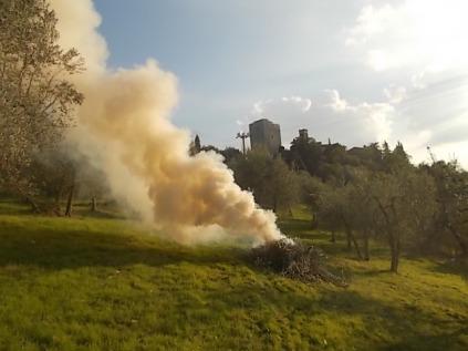 vertine ottobre 2017 potatura olivi (3)