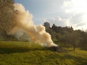 vertine ottobre 2017 potatura olivi (6)