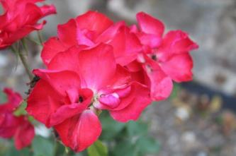 firenze, giardino delle rose, folon, (11)