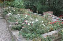 firenze, giardino delle rose, folon, (3)