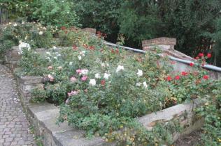 firenze, giardino delle rose, folon, (4)