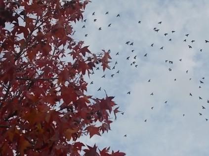 foglie di acero tappeto (11)