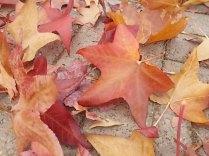 foglie di acero tappeto (14)
