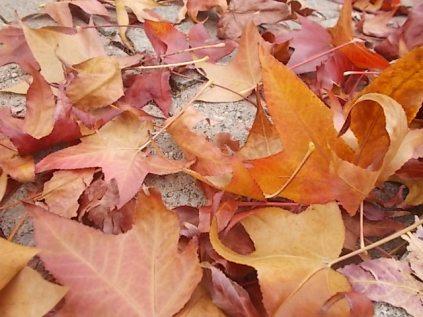 foglie di acero tappeto (15)