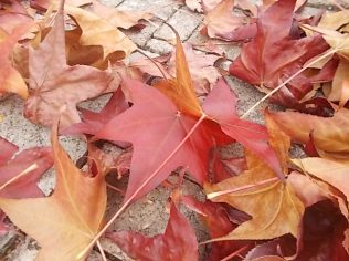 foglie di acero tappeto (16)
