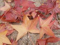foglie di acero tappeto (17)