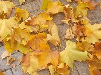 foglie di acero tappeto (3)