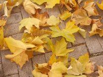 foglie di acero tappeto (5)
