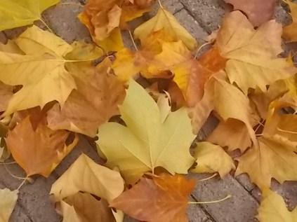 foglie di acero tappeto (6)