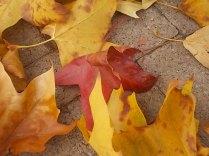 foglie di acero tappeto (7)