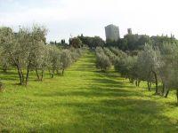 oliveta-di-vertine
