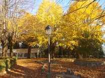 radda in chianti autunno (11)